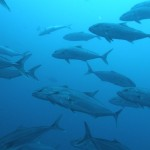 Some fantastic underwater wildlife to be seen on every dive